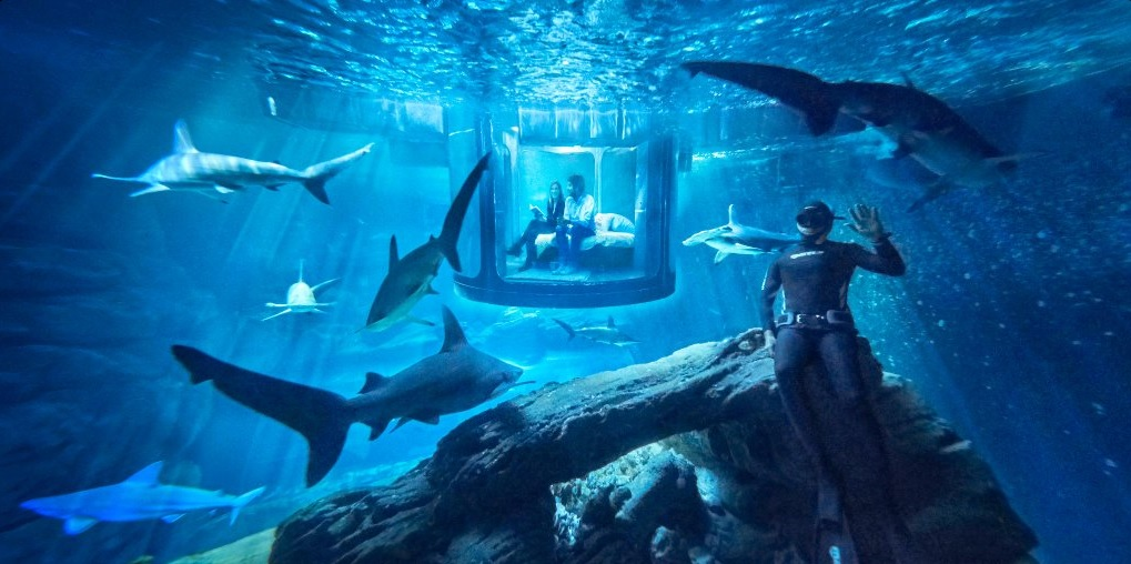 Sleep with the fishes… in a French shark aquarium